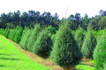 Lebanon Christmas Tree Farm Family Owned Since 1985 Christmas Tree